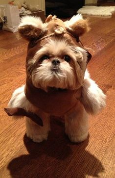 Ewok from Endor ?