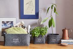 Máte rádi avokádo? Pak si z pecky vypěstujte vlastní okrasnou rostlinku, kterou můžete darovat nebo obdivovat doma.