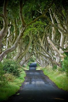 Tree Covered Road, Ballymoney, Northern Ireland