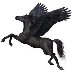 Black Pegasus Profile Corey Ford
