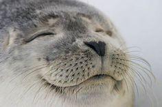 Seals are cute