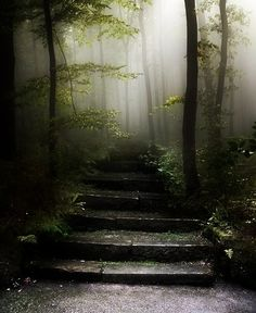 stairs to the misty forest