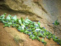 http://www.larc1.com/ecuador/napo-wildlife-center/images/napo-wc-parrots-01-b400w.jpg