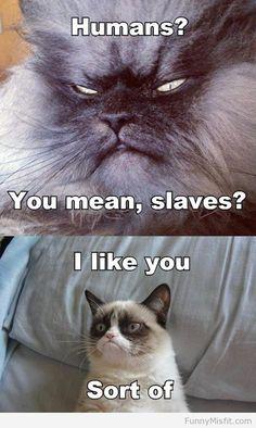 we aren't slaves