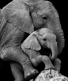 Photo Elephant, Cute Baby Elephant, Elephant Art, African Elephant, African Animals, Cute Baby Animals, Mother And Baby Animals, Mother And Baby Elephant, Baby Hippo