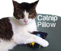 Your cat will LOVE having his own catnip pillow! My cats love these so much that they actually sleep with their little pillow. I think they're trying to keep the ...