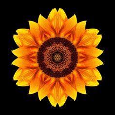 Mandala sunflower