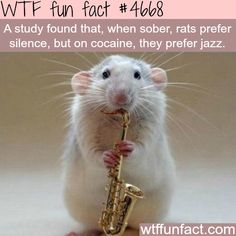 What type of music do rats prefer - WTF fun facts
