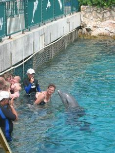 Curacao Dolphin Academy       Bapor Kibra z/n, Willemstad AN5999, Curacao           5999-4658900         Website         E-mail                                           66 visitor photos         Ranked #3 of 26 attractions in Willemstad     219 Reviews         Book Now         Type: Amusement/ Theme Parks     Activities: Swimming with dolphins     Description: Dolphin Academy