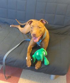 Gabby... adopted!