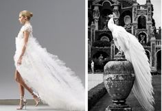white peacock, wedding dress, high waste like char was talking about Peacock Wedding Dresses, Fantasy Wedding Dresses, Wedding Gowns, White Peacock, Peacock Decor, Feather Dress, Wedding Inspiration, Wedding Ideas, Bridal Gowns