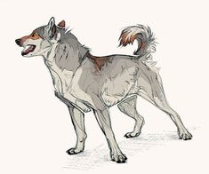 dog training,teach your dog,dog learning,dog tips,dog hacks Animal Sketches, Animal Drawings, Cool Drawings, Art Sketches, Wolf Poses, Creature Design, Furry Art, New Art, Amazing Art