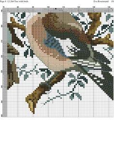 Birds in tree 12