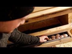 Finally Clean Eggs With These Nesting Boxes Electric Poultry Netting, Small Forest Axe, Splitting Axe, Chicken Nesting Boxes, Infrared Heater, Wood Bird, Homestead Survival, Urban Farming, Make A Donation