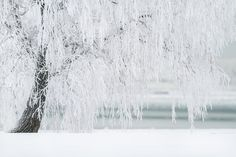 Winter, Tree, Snow, Landscape, Cold, December