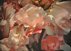 Nick Knight  flora - peach
