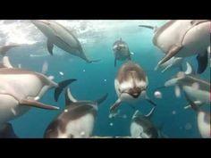 Swimming with Dolphins - Santa Cruz, CA