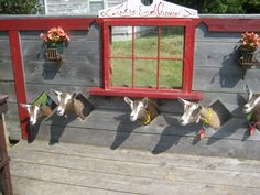 #goatvet likes these Toggenburg kids and their look out holes