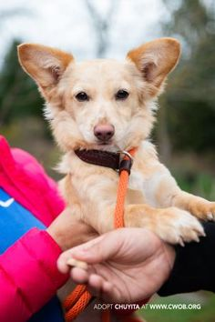 Fresno Ca Terrier Unknown Type Small Meet Jane A Pet For
