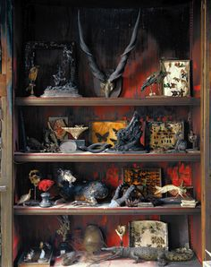 Weird Taxidermy Cabinet Of Curiosities Natural History Gothic, Taxidermy Display, Historia Natural, Cabinet Of Curiosities, Curiosity Shop, Ouija, Wonderland, Steampunk, Box Art