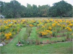 mepkin abbey labyrinth in bloom. I so love this labyrinth!