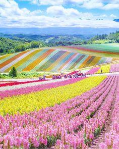 Wonderful Places: Flower field in Hokkaido - Japan ✨🌸🌸🌸✨ Picture by ✨✨ . Japan Picture, Japan Photo, Photo Japon, Nature Living, Nature Nature, Nature Photos, Wonderful Places, Beautiful Places, Amazing Things