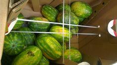 Zakázané melóny