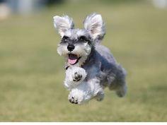 飛行犬撮影隊-KIZUNA-の画像|エキサイトブログ (blog)