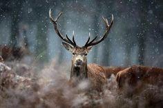 Let's go deer photo-hunting!