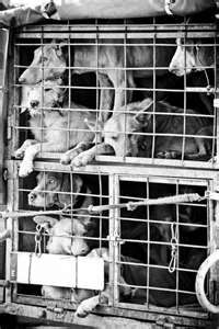 When you buy dogs from puppy mills, this is really where you're doing your shopping. If you buy from pet stores you support the horrendous conditions these dogs have to live in. Adopt! Don't shop!