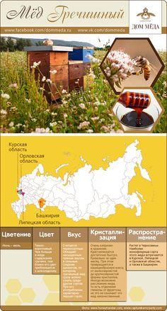Инфографика: гречишный мёд