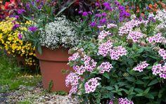 Décor fleuri en pots cet été