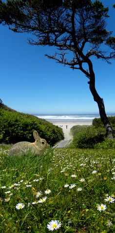 Beach Bunny.  Go to www.YourTravelVideos.com or just click on photo for home videos and much more on sites like this.