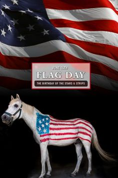 In 1777, we adopted the Stars and Stripes as our national flag. We hope everyone enjoys their Flag Day! We offer a 5% military discount on all purchases 24/7/365. #flagday #rammfence #equestrian #horses #usa #veterans #military