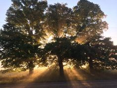 Rays of sunlight through trees at dawn on summer morning - Hills of Headwaters, Ontario. Shabby Chic Antiques, Farm Stay, Horse Farms, Antique Shops, Rustic Chic, Resort Spa, Renting A House, Sunlight, Ontario