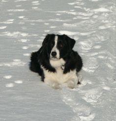 Collie on ice