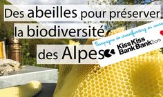 Nous lançons une campagne de financement participatif sur KKBB, https://www.kisskissbankbank.com/des-abeilles-pour-preserver-la-biodiversite-des-alpes. Nous souhaitons créer un rucher pédagogique pour accueillir les novices, soutenez nous et rejoignez les premiers contributeurs :) merci d'avance pour votre soutien !