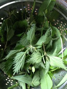 Nettle and Ramson make a great combination for soup. Lots more in Lovely Grub on Bushcraft UK