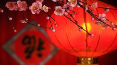 Are you planning on feng shui wedding? Check out successful simple feng shui rules not only will you feel calmer, your guests will too. Feng Shui, Chinese New Year Decorations, New Years Decorations, Japanese Paper Lanterns, New Years Traditions, Deco Originale, Happy Chinese New Year, Happy Year, Happy Life