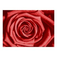 Red Rose Poster - rose style gifts diy customize special roses flowers