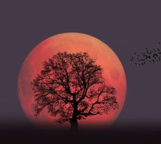 On April the stunning Super Pink Moon will make an appearance in the night sky. Here's how to take an incredible photo of it! Take Better Photos, How To Take Photos, Moon Names, Next Full Moon, Cool Pictures, Cool Photos, Astronomical Events, Dame Nature, Shoot The Moon