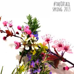 Spring to come soon... #theOXtail 2013