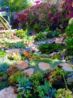 An evening in my succulent garden with designer Laura Eubanks at Design for Sere. - An evening in my succulent garden with designer Laura Eubanks at Design for Serenity in Chula Vista - Succulent Rock Garden, Succulent Landscaping, Planting Succulents, Garden Landscaping, Xeriscape Plants, Landscaping Rocks, Xeriscaping, Magic Garden, Diy Garden