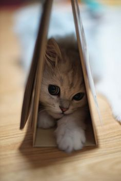 catsbeaversandducks:  Календарь 2014 Фото по являются выражением точки зрения