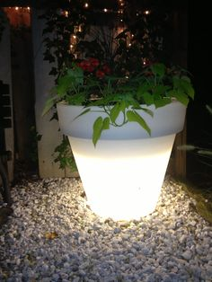 Glow in the dark potted plant