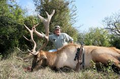 Exotic Elk Hunt in Texas. (Money can buy the thrill of an animal's pain, fear, panic, and last breath.)