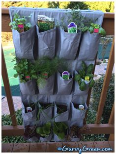 How to Grow your herbs in a shoe rack