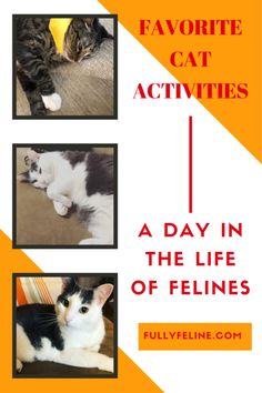 Cat Activities: You Can't Put that on a Resume! - Fully Feline Looking at a day in the life of cats.  What's your cat's favorite thing to do each day? #cats #catlife