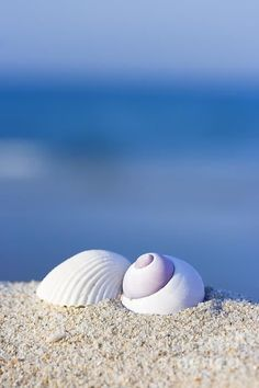 """janienme: """"heissehexebayern: """"gualty: """"La cura per ogni cosa è l'acqua salata: sudore, lacrime, o il mare. (Karen Blixen) Buongiorno a tutti …….. good morning. bonjour. buenos días. dzień dobry. jó reggelt. guten Morgen. доброе утро. god..."""