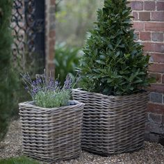 Square Rattan Planters from Agriframes